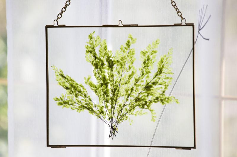 Glasbild mit echten konservierten grünen Farn in vintage Optik, das für lange zeit hält