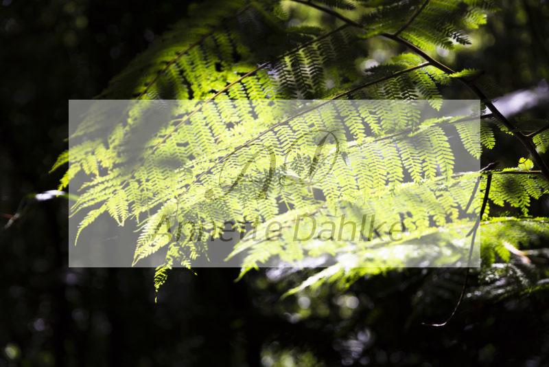 Fotografie nach Feng Sui Blätter im Licht