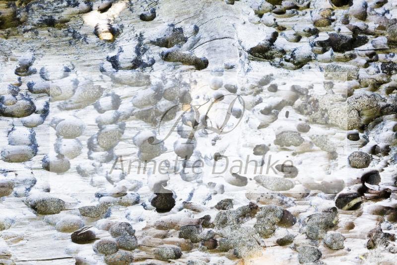 Fotografie Muster der Natur nach Feng Shui