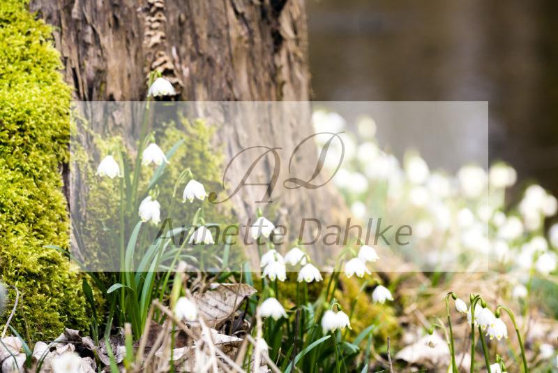Wandfotografie Frühlingsboten nach Feng Shui Element Holz